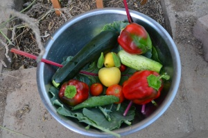 zucchini, red bell peppers,Anna Apples,cucmber,okra,tomatoes,Swiss chard,collard greens